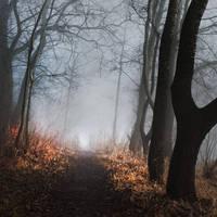 lead me forever II by JoannaRzeznikowska