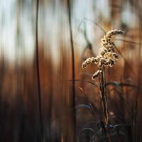finding light XI by JoannaRzeznikowska