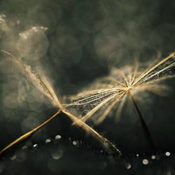 you are my light VI by JoannaRzeznikowska