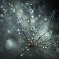 a world of fragile things V by JoannaRzeznikowska