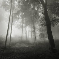 whispers of the forest XII by JoannaRzeznikowska