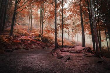 the forest of my dreams III by JoannaRzeznikowska