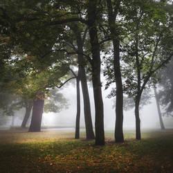 sunday morning II by JoannaRzeznikowska