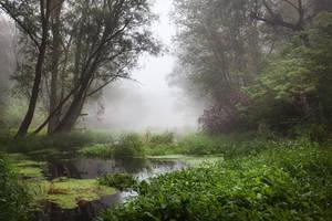 misty XVIII by JoannaRzeznikowska