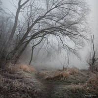 my paths XX by JoannaRzeznikowska