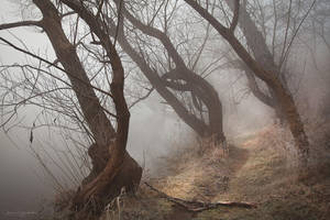 my paths XXVII by JoannaRzeznikowska