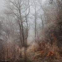 my paths XXVIII by JoannaRzeznikowska