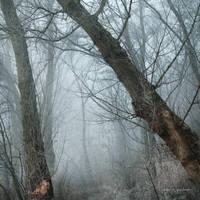 my paths XXIX by JoannaRzeznikowska