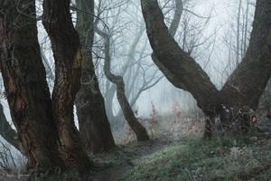 my paths XLI by JoannaRzeznikowska