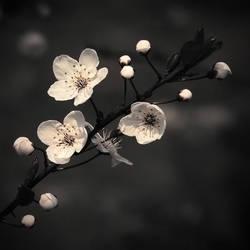 Dark Spring by JoannaRzeznikowska
