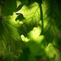 Green For You by JoannaRzeznikowska