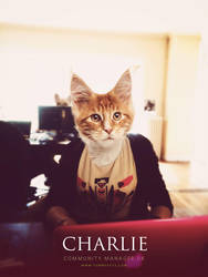 Charlie - Community Manager @Yummypets by GrunySo