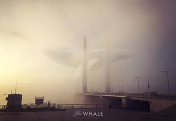 The Whale by GrunySo