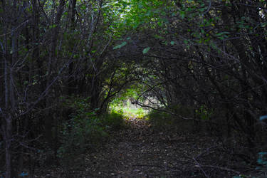 The Tunnel by HaleyGottardo