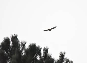 Unidentified Hawk in September by HaleyGottardo
