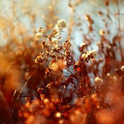 Return of the Sun by MarsiaMS
