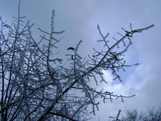 Frozen Tree by Skyrana