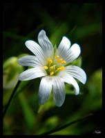 beauty in the meadow by Niophee