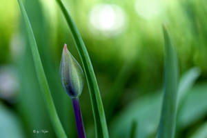 Green Born by Niophee