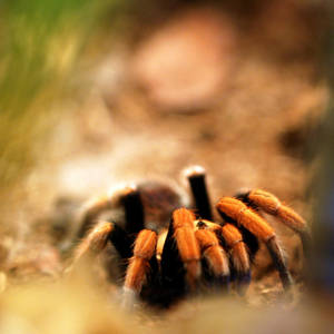 itzi bitzi spider by Niophee