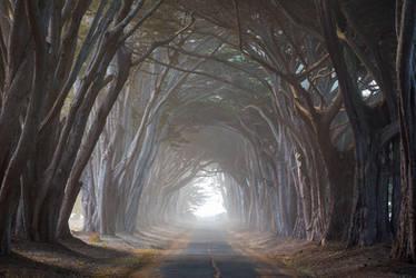 Cypress Tunnel by StevenDavisPhoto