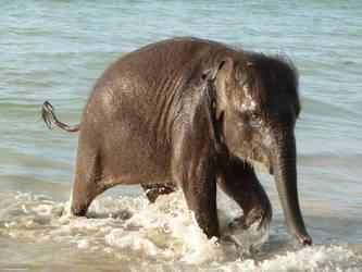 Elephant) by Alik-Volga