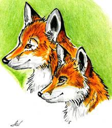 Foxes) by Alik-Volga