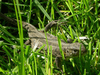 Predator from a garden. by Alik-Volga