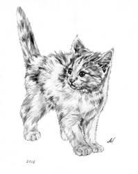 Kitten morning) by Alik-Volga
