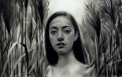 Marsh by Briscott