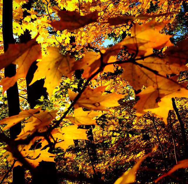 Autumn is here!! by Photographergirl14