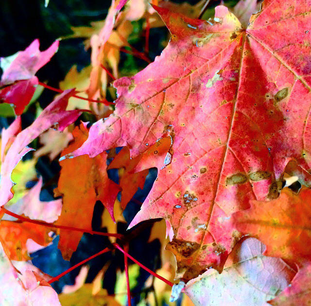 Red leaves by Photographergirl14