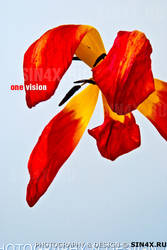 one vision by sin4x-ru