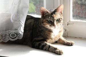 Cat I by Phase-B