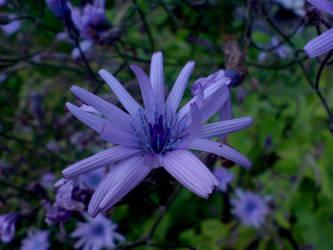 Purple Flower by MongoLikesCandy