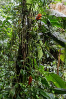 Pflanzen im Nebelwald by Freacore