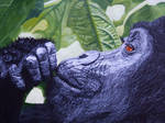 Silverback Gorilla by Cosmic-Cherry-Tree