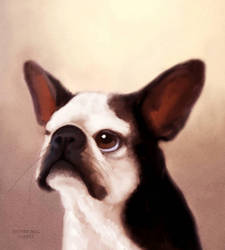 Bella the Boston Terrier  by ArtofJefferyHebert