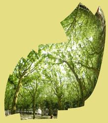 Tree veil by FiLH