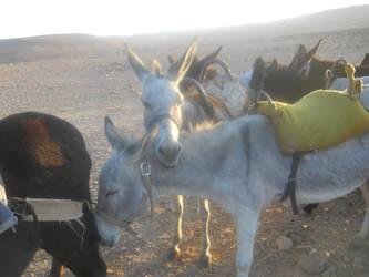 Donkey Love by ColdBreeeze