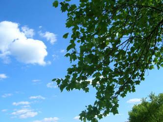 Blue Skies by wishkres