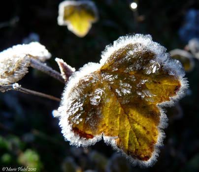 Frozen Leaf by marytchoo