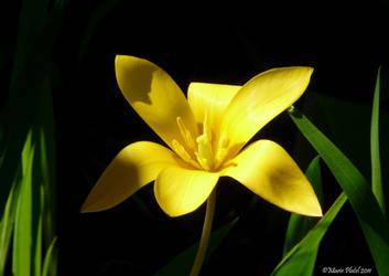 Yellow by marytchoo