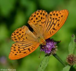 Butterfly II by marytchoo