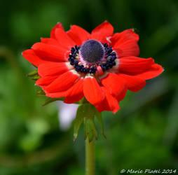 Red lady by marytchoo