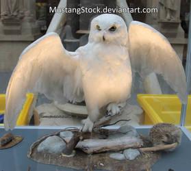 Owl stock by MustangStock