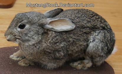 Rabbit stock by MustangStock
