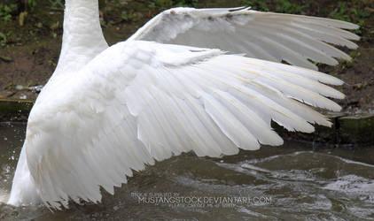 Swan Wings Stock by MustangStock