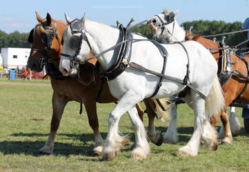 Driving horses Stock by MustangStock