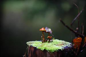 Waldes kleine Lichtung by RitterRunkel